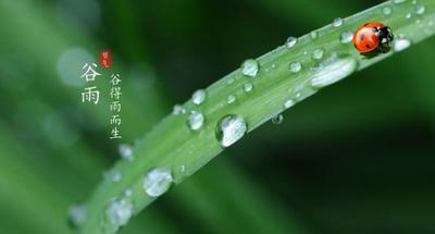 Hot Words: Grain Rain 春天最后一个节气-谷雨