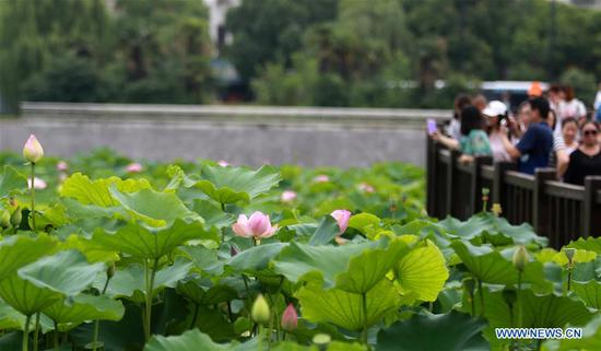 Tourists view lotus flowers at a park in Yangzhou, east China's Jiangsu Province, June 27, 2020. China saw around 48.81 million domestic tourist trips made during the Dragon Boat Festival holiday, bringing in 12.28 billion yuan (around 1.74 billion U.S. dollars), the Ministry of Culture and Tourism said Saturday. (Photo by Meng Delong/Xinhua)