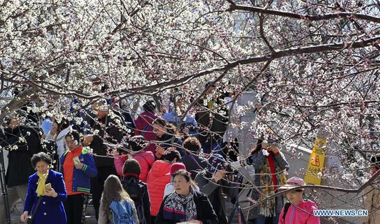 Visitors enjoy the blossoms near Kunming Lake in the Summer Palace in Beijing, capital of China, on March 13, 2019. (Xinhua/Liu Xianguo)