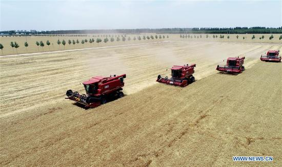 Reapers work at the wheat field in Yanli Village of Nanhe County, north China's Hebei Province, June 10, 2019. The wheat has entered harvest season here. (Xinhua/Zhu Xudong)
