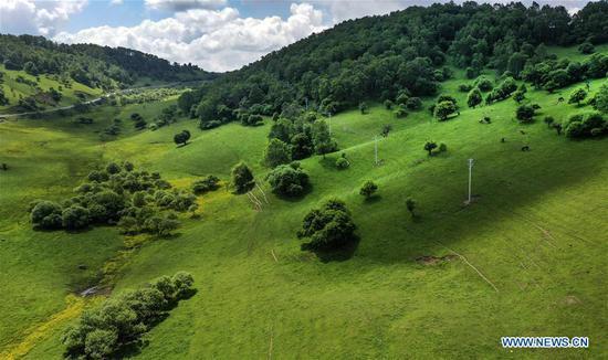Aerial photo taken on June 12, 2019 shows the view of Guanshan Grassland at Longxian County in Baoji, northwest China's Shaanxi Province. (Xinhua/Tao Ming)