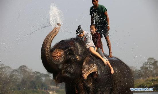 Tourists enjoy elephant bathing during the 15th Elephant Festival in Sauraha, a tourism hub in southwest Nepal's Chitwan district on Dec. 27, 2018. (Xinhua/Sunil Sharma)