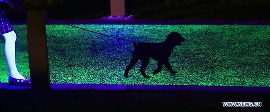 A dog walks on the 2.5-km fluorescent walkway at Mozishan Park in Shenyang, capital of northeast China's Liaoning Province, June 10, 2019. (Xinhua/Yang Qing)