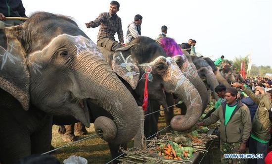 Elephants enjoy their favorite food in a picnic during the 15th Elephant Festival in Sauraha, a tourism hub in southwest Nepal's Chitwan district on Dec. 27, 2018. (Xinhua/Sunil Sharma)