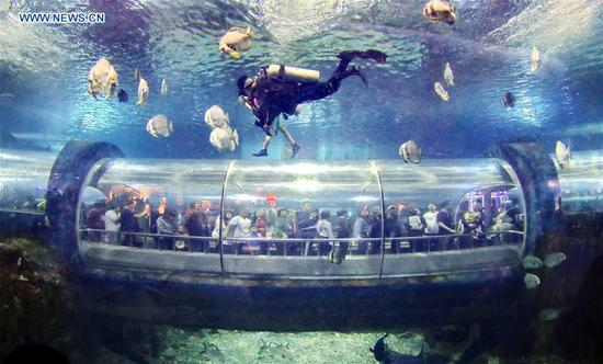 Tourists have fun at Xin'ao Aquarium in Qinhuangdao, north China's Hebei Province, May 2, 2019. (Xinhua/Cao Jianxiong)