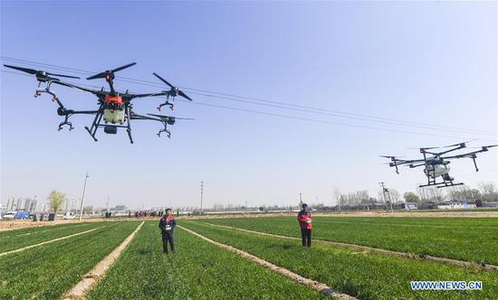 People fertilize wheat with drones in Gucheng County, north China's Heibei Province, April. 1, 2019. Rural revitalization strategy was first put forward during the 19th National Congress of the Communist Party of China in 2017 and repeatedly stressed by the Chinese leadership since then. The strategy's overall goal is to build rural areas with thriving businesses, pleasant living environments, social etiquette and civility, effective governance, and prosperity. (Xinhua/Li Xiaoguo)