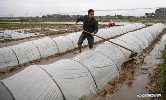 Huang Yongcheng, a local farmer, maintains seedling greenhouse in Banping Village, Kangxiling Town of Qinzhou, south China's Guangxi Zhuang Autonomous Region, March 7, 2019. Farmers in Qinzhou are busy with planting early rice in spring. (Xinhua/Zhang Ailin)