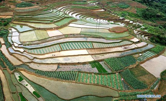 Aerial photo taken on May 9, 2018 shows villagers working at the terraced fields in Hanshan Village of Longlin various ethnic group autonomous county, south China's Guangxi Zhuang Autonomous Region. (Xinhua/Zhang Ailin)