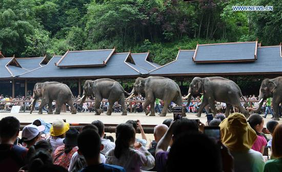 Tourists watch an Asian elephant parade during a public awareness activity on the occasion of World Elephant Day in a tourism area in the Dai Autonomous Prefecture of Xishuangbanna, southwest China's Yunnan Province, Aug. 12, 2019. (Xinhua/Yang Zongyou)