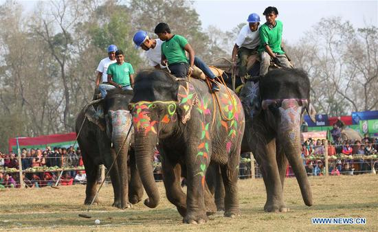 Players participate in Elephant polo during the 15th Elephant Festival in Sauraha, a tourism hub in southwest Nepal's Chitwan district on Dec. 27, 2018. (Xinhua/Sunil Sharma)
