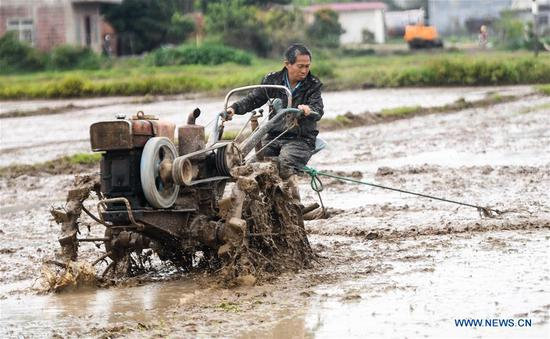 A farmer operates a tiller to plow the field in Banping village, Kangxiling Town of Qinzhou, south China's Guangxi Zhuang Autonomous Region, March 7, 2019. Farmers in Qinzhou are busy with planting early rice in spring. (Xinhua/Zhang Ailin)