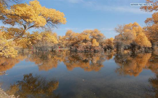 Photo taken on Oct. 11, 2020 shows a view of the populus euphratica forest in Jinta County of Jiuquan, northwest China's Gansu Province. (Photo by Chen Li/Xinhua)