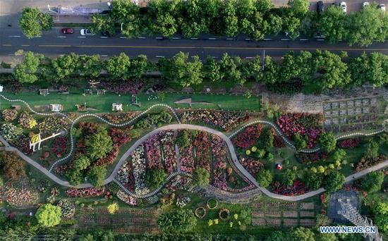 Aerial photo taken on May 22, 2019 shows a botanical garden in north China's Tianjin Economic-Technological Development Area (TEDA). Nearly ten years of greening efforts have successfully transformed a saline-alkaline marsh into a botanical garden with over 6,000 species of plants. The garden now serves as a plant resource bank in TEDA for scientific research, scientific education, demonstration and entertainment purposes. (Xinhua/Yue Yuewei)