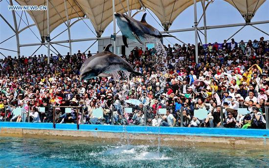Tourists watch a dolphin show at Xin'ao Aquarium in Qinhuangdao, north China's Hebei Province, May 2, 2019. (Xinhua/Cao Jianxiong)