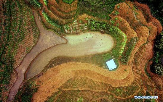 Aerial photo taken on May 9, 2018 shows the scenery of terraced fields in Hanshan Village of Longlin various ethnic group autonomous county, south China's Guangxi Zhuang Autonomous Region. (Xinhua/Zhang Ailin)