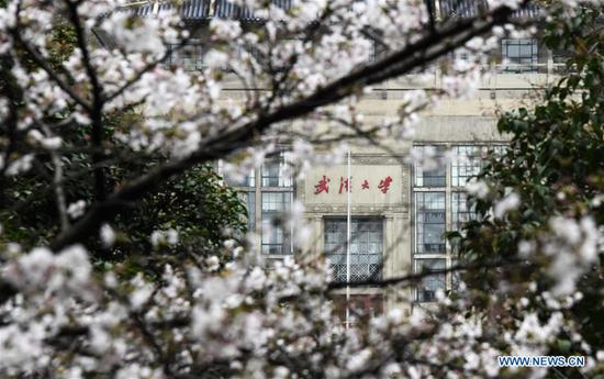 Photo taken on March 16, 2020 shows spring scenery at the campus of Wuhan University in Wuhan, central China's Hubei Province. The campus of Wuhan University is not open to the public due to epidemic prevention and control works. The university on Monday organized a ten-day live broadcast to show cherry blossoms in spring in the campus. (Xinhua/Cheng Min)
