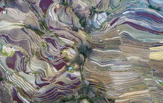 Aerial photo taken on Feb. 24, 2021 shows the scenery of Hani terraced fields in Yuanyang County of Honghe Hani and Yi Autonomous Prefecture, southwest China's Yunnan Province. (Xinhua/Chen Xinbo)