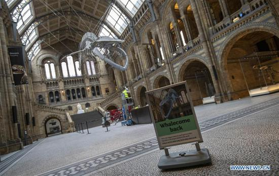 A sign is placed in front of the blue whale skeleton at Hintze Hall of Natural History Museum before its reopening in London, Britain, on July 27, 2020. The Natural History Museum will reopen from August 5. (Xinhua/Han Yan)