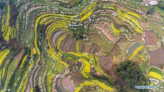 Photo taken on March 12, 2018 shows the scenery of rape and plum flowers in Xinfang Village of Jianwei County, southwest China's Sichuan Province. Rural tourism has been stressed as a crucial part of China's strategies of rural vitalization. (Xinhua/Jiang Hongjing)