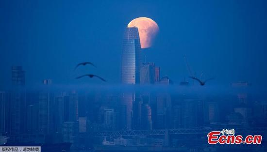 A super blue blood moon is seen setting behind Salesforce Tower in San Francisco, California before dawn, Jan. 31, 2018. (Photo/Agencies)