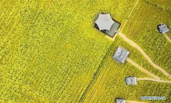 Photo taken on March 9, 2018 shows the rape flowers in Daoming Township of Chengdu, southwest China's Sichuan Province. Rural tourism has been stressed as a crucial part of China's strategies of rural vitalization. (Xinhua/Jiang Hongjing)