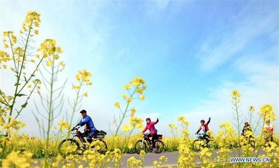 Visitors ride bicycles along the field of flowers in Ranyi Township of Chengdu, southwest China's Sichuan Province, March 11, 2018. Rural tourism has been stressed as a crucial part of China's strategies of rural vitalization. (Xinhua/Jiang Hongjing)