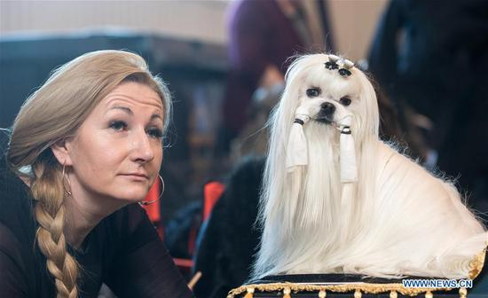 A Maltese is seen at an international dog show in Vilnius, Lithuania, on March 4, 2018. Around 2,000 dogs from Lithuania, Latvia, Estonia, Sweden and other countries were presented in the event lasting from March 2 to March 4. (Xinhua/Alfredas Pliadis)