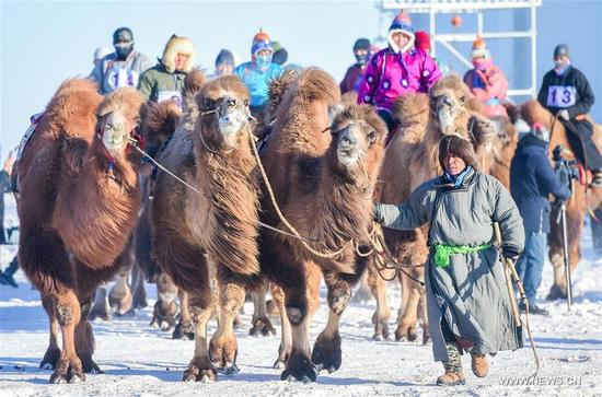 Herdsmen ride camels to take part in a camel fair in Sunite Right Banner, north China's Inner Mongolia Autonomous Region, Jan. 9, 2018. A camel fair, a local traditional festival including camel race and camel beauty contest, was held in the Banner on Tuesday. More than 200 camels took part in the fair. (Xinhua/Lian Zhen)