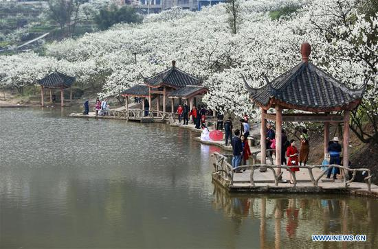 Tourists view plum blossoms at Shangmatai Village of Chengjiang Township, southwest China's Chongqing Municipality, March 11, 2018. (Xinhua/Qin Tingfu)