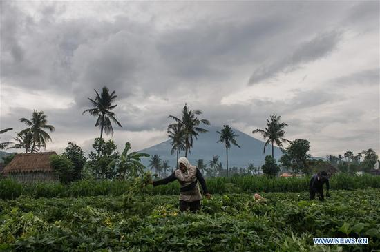 Local people work in their farm while Mount Agung volcano spewing volcanic ash at Amed in Karangasem district, Bali, Indonesia, Nov. 30, 2017. (Xinhua/Veri Sanovri)