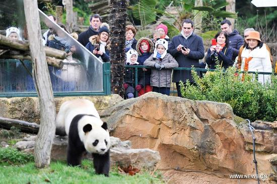 """Visitors watch the male giant panda """"Yuan Zi"""", the father of the panda baby """"Yuan Meng"""" in Zooparc de Beauval, Saint-Aigan, France on Jan. 13, 2018. The first panda cub born in France """"Yuan Meng"""" debuts with the public on Saturday morning. (Xinhua/Chen Yichen)"""