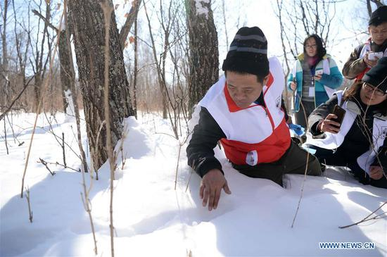 Tiger conservation experts examine a wild animal footprint during a Siberian tiger conservation skills contest in Suifenhe, northeast China's Heilongjiang Province, March 5, 2018. Twenty tiger conservation teams from China and Russia had competed in the contest in events including wildlife law enforcement, trap detachment, setting-up and debugging of infrared cameras, as well as keeping record of the habitat environment. (Xinhua/Wang Kai)