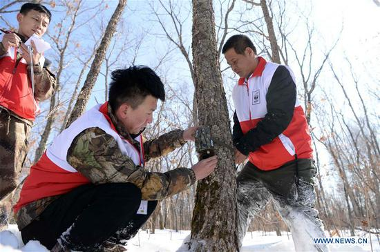 Tiger conservation experts set up an infrared camera during a Siberian tiger conservation skills contest in Suifenhe, northeast China's Heilongjiang Province, March 5, 2018. Twenty tiger conservation teams from China and Russia had competed in the contest in events including wildlife law enforcement, trap detachment, setting-up and debugging of infrared cameras, as well as keeping record of the habitat environment. (Xinhua/Wang Kai)