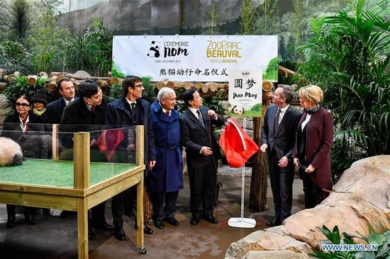 Brigitte Macron (1st R), wife of French President Emmanuel Macron, and Chinese Vice Foreign Minister Zhang Yesui (3rd R), reveal the name of a panda baby during a naming ceremony in Saint-Aignan, France, on Dec. 4, 2017. Brigitte Macron, wife of French President Emmanuel Macron, revealed the name of the panda baby, the first-ever cub born in the country, at a naming ceremony at a zoo in central France on Monday. Joined by Chinese officials, Brigitte Macron, who is also the new panda's godmother, announced that the four-month-old cub's name was Yuan Meng. (Xinhua/Chen Yichen)