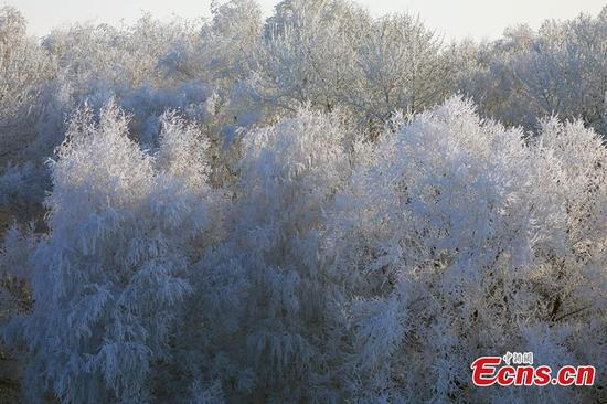 Fog and freezing temperatures transform Habahe (Kaba) County of Xinjiang Uyghur Autonomous Region into winter wonderland. (Photo: China News Service/Liu Shihe)