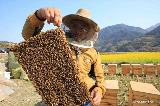 A beekeeper shows honey in Anle Village of Rongjiang County, southwest China's Guizhou Province, Feb. 5, 2018. (Xinhua/Li Changhua)