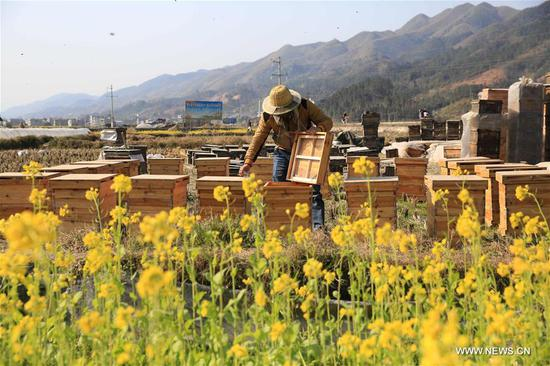 A beekeeper checks honey in Anle Village of Rongjiang County, southwest China's Guizhou Province, Feb. 5, 2018. (Xinhua/Li Changhua)