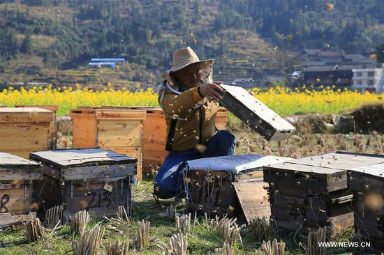 A beekeeper collects honey in Anle Village of Rongjiang County, southwest China's Guizhou Province, Feb. 5, 2018. (Xinhua/Li Changhua)