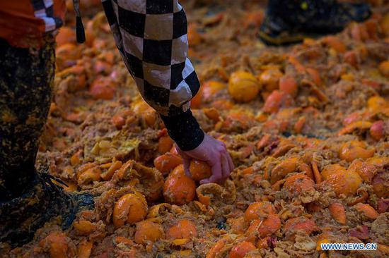 A member of a team collects oranges during an annual historical carnival