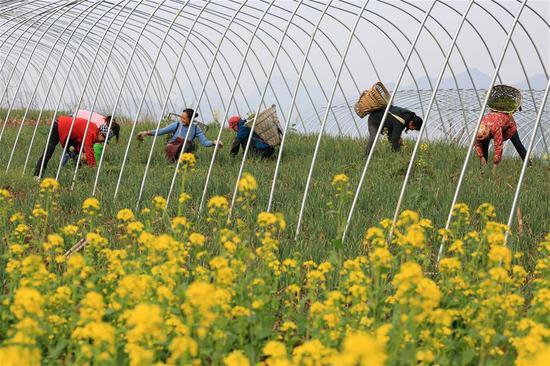 Villagers work at a field in Qinggang Village of Tieshi Township in Qianxi County, southwest China's Guizhou province, March 13, 2018. (Xinhua/Wang Chunliang)