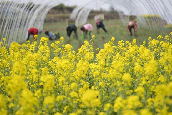 Villagers work at a field in Qinggang Village of Tieshi Township in Qianxi County, southwest China's Guizhou province, March 13, 2018. (Xinhua/Han Xianpu)