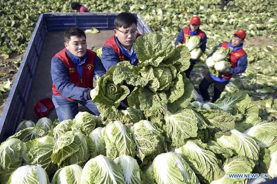 Volunteers help farmers to carry cabbages to sell in Matou Town of Tancheng County, east China's Shandong Province, Dec. 5, 2017, the international volunteer day. (Xinhua/Fang Dehua)