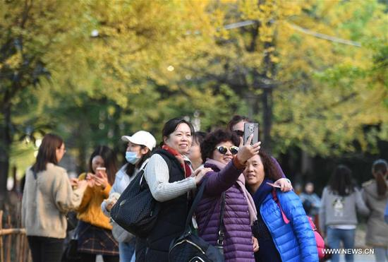 Women pose for photos under ginkgo trees at Yunnan University in Kunming, capital of southwest China's Yunnan Province, Dec. 6, 2017. On the campus of Yunnan University, there is a road sided with ginkgo trees. Each year during the late autumn and early winter, the beautiful scenery of ginkgo trees here would attract lots of tourists. (Xinhua/Yang Zongyou)