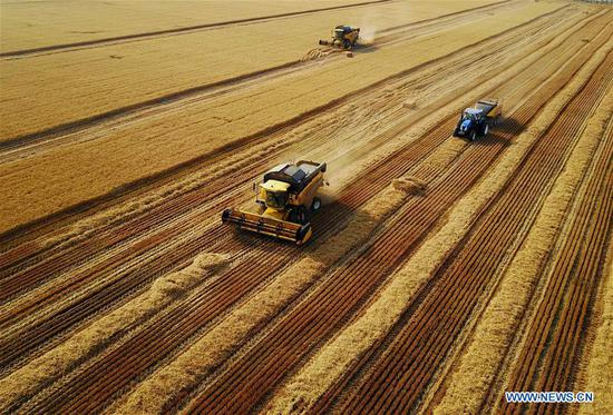 Harvesters collect wheat in the fields in Xunxian County, central China's Henan Province, June 7, 2017. China's annual political sessions of the National People's Congress (NPC) and the National Committee of the Chinese People's Political Consultative Conference (CPPCC) are scheduled to convene in March, 2018. During the two sessions, development agendas will be reviewed and discussed, and key policies will be adopted. According to the 13th five-year plan for economic and social development of China covering the period 2016 to 2020, coordination has been emphasized as an integral quality of sustained and healthy development, which underlines advancing coordinated development between rural and urban areas, between different regions, and between economic and social development. (Xinhua/Li An)