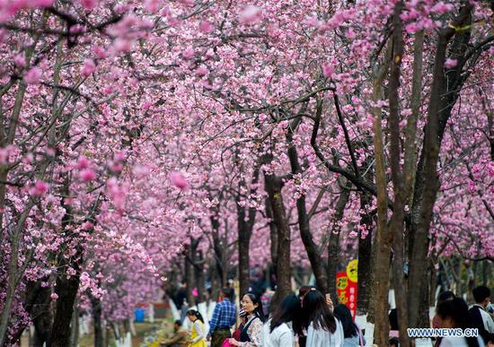 Tourists look at cherry blossoms at Yuantongshan Park in Kunming, capital of southwest China's Yunnan Province, March 6, 2018. The cultivation of cherry blossoms in Kunming can be traced back to as early as the 13th century. Nowadays, the cherry blossoms at Kunming's Yuantongshan Park are a popular spring attraction for locals and tourists alike. (Xinhua/Hu Chao)