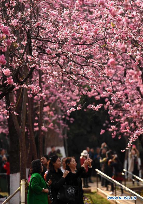 Tourists take photos of cherry blossoms at Yuantongshan Park in Kunming, capital of southwest China's Yunnan Province, March 6, 2018. The cultivation of cherry blossoms in Kunming can be traced back to as early as the 13th century. Nowadays, the cherry blossoms at Kunming's Yuantongshan Park are a popular spring attraction for locals and tourists alike. (Xinhua/Lin Yiguang)