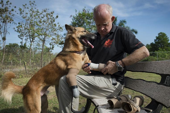 'Blade runner' legs give maimed dog new lease of life
