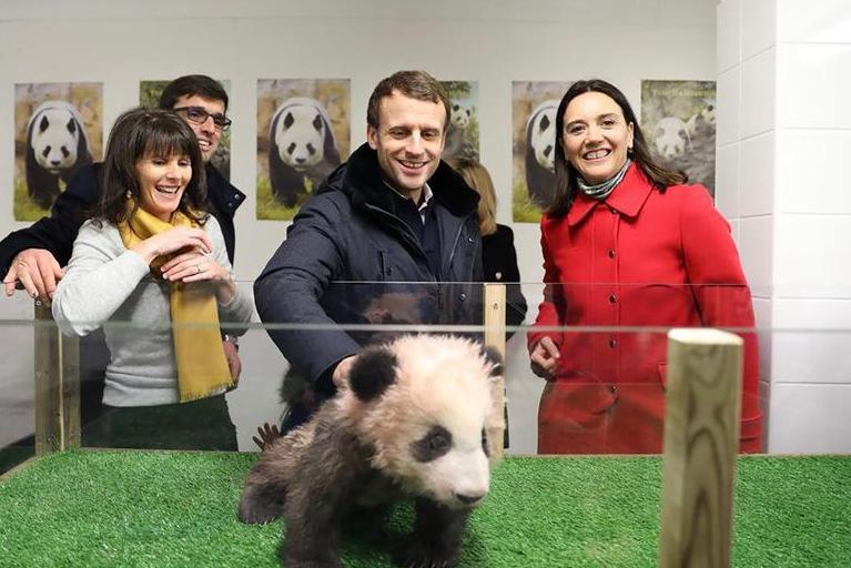 French president Macron celebrates birthday with panda cub Yuan Meng