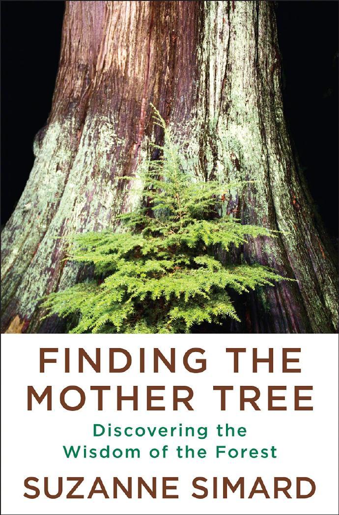 艾米亚当斯联手吉伦哈尔打造新片 解读神秘母亲树