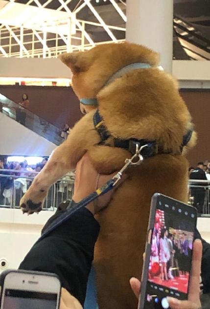 组图:狗子被迫追星!粉丝为吸引刘昊然注意力当众举柴犬
